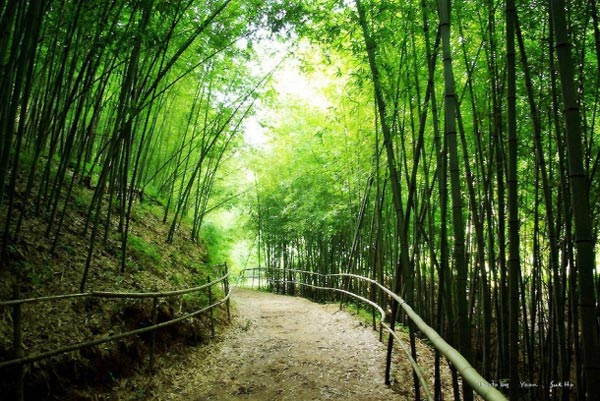 the-jungnogwon-bamboo-fores